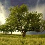 Tree_of_life_by_wtamas_4x3